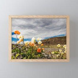 Icelandic Poppies III Framed Mini Art Print