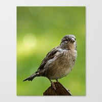 sparrow Canvas Prints featuring sparrow  by Karl-Heinz Lüpke