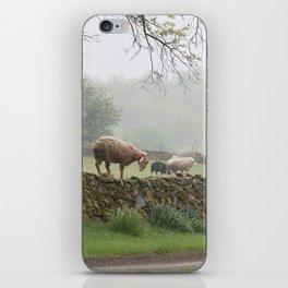 Sheep on Stone Wall iPhone Skin