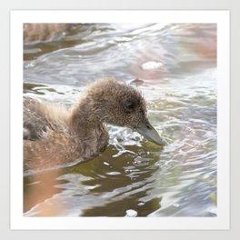 Watercolor Bird, Gadwall Duck 02, Lake Myvatn, Iceland Art Print