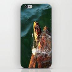 Loggerhead Turtle iPhone & iPod Skin