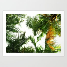 the tropical coconut is here Art Print