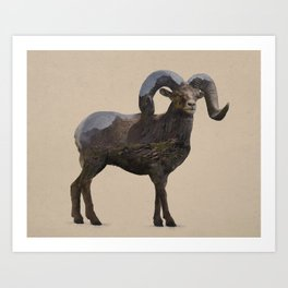 The Rocky Mountain Bighorn Sheep Art Print