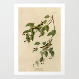 60 Carbonated Warbler17 Art Print