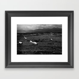 Sheep and Mountains, Inch Beach, Dingle Peninsula Framed Art Print