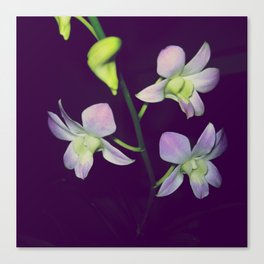 National Flower Canvas Print