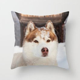 Ginger in the snow Throw Pillow