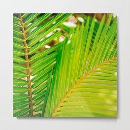 Palm summer Metal Print