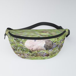 Mourning Dove Stare Fanny Pack