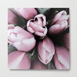 Blush Pink Tulip Buds Metal Print