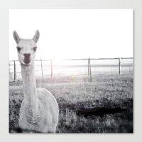 llama Canvas Prints featuring Llama by PoseManikin