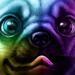 Colour Pup