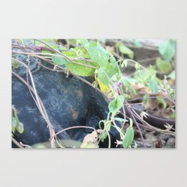 The Way They Want Canvas Print