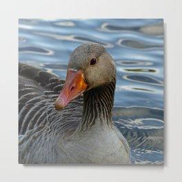 Greylag Goose, Anser anser, Graugans Metal Print