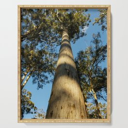Karri Tree, Manjimup, Western Australia Serving Tray