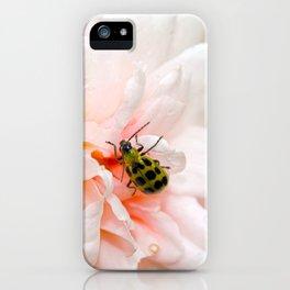 Cucumber Beetle & Winter Rose iPhone Case