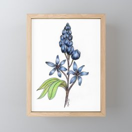 Scilla Framed Mini Art Print