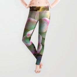 closeup green and pink succulent plant background Leggings