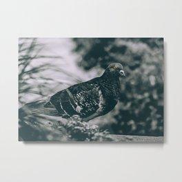 City Bird. Black and White Photograph Metal Print