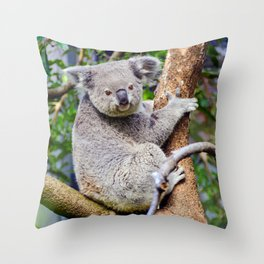 Australian Koala Bear Photo Throw Pillow