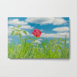 Beauty Nature Scene Photo Metal Print