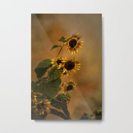 Origin Of Sunflowers  Metal Print