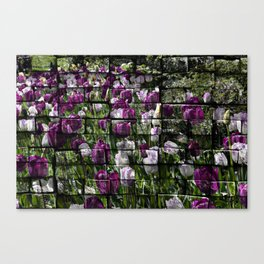 Tulips in brick wall Canvas Print
