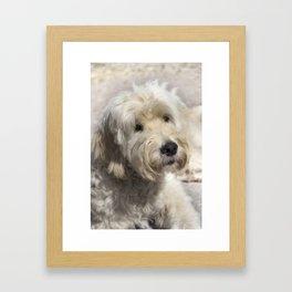 Dog Goldendoodle Golden Doodle Framed Art Print
