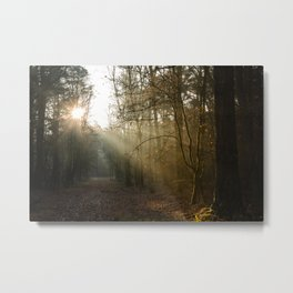 Sunrays in the forest on a cold morning Metal Print