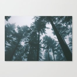 Forest XIII Canvas Print