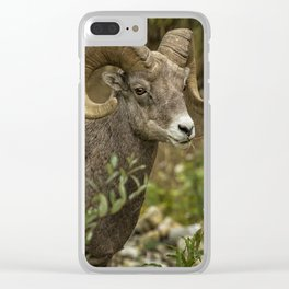 Ram Eating Fireweed Clear iPhone Case