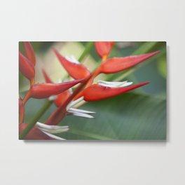 Red Birds Metal Print