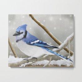 Blue Jay in Winter Metal Print