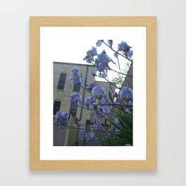 june iris 4 Framed Art Print