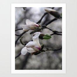 magnolia 05 textured paper edit Art Print