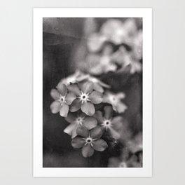 Black and White Botanical Flower Study 1 Art Print
