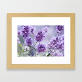 lavender Purple Framed Art Print