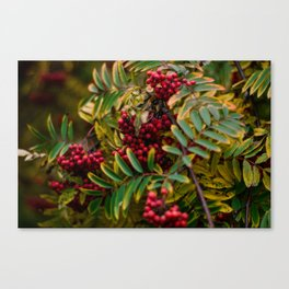 Bright Autumn Canvas Print