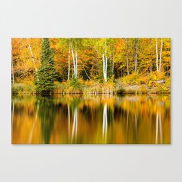 Autumn Reflections - Birch trees on Lake Plumbago Canvas Print