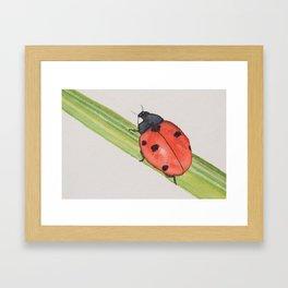 Ladybird on a blade of grass Framed Art Print