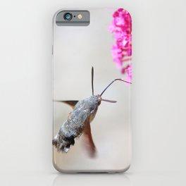 Hummingbird Hawk moth on Valerian flower iPhone Case