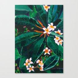 Frangipanis Canvas Print