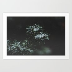 Forever Evergreen Art Print