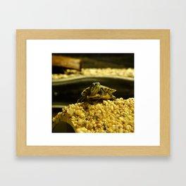 Tiny Turtle Framed Art Print