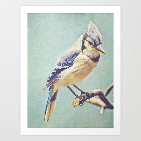 Virginia Bluejay Art Print