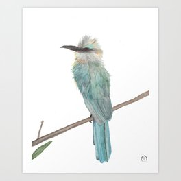 Aqua Bee Eater watercolor Art Print