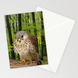 Little hawk -  wildlife photography Stationery Cards