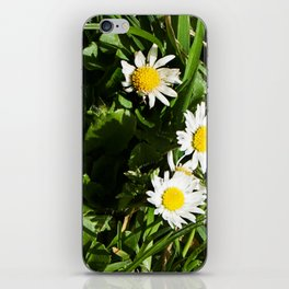 Spring Daisy Photography Print iPhone Skin