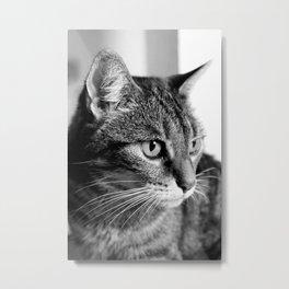 cat look Metal Print