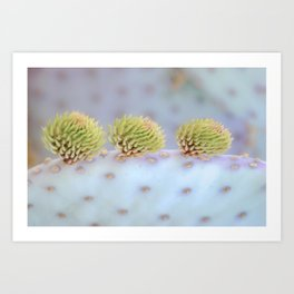 """Santa Rita Prickly Pear 2"" Art Print"